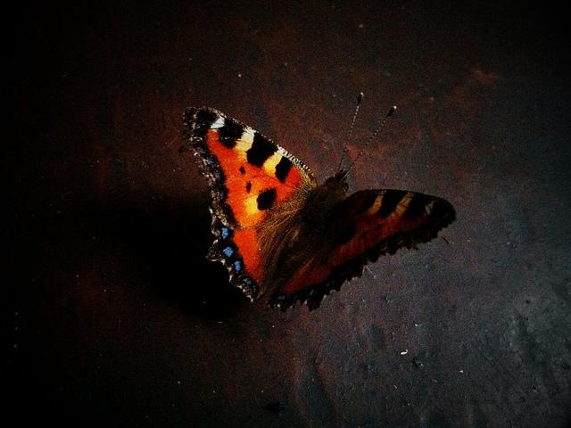 butterfly in january | Flickr - Photo Sharing!