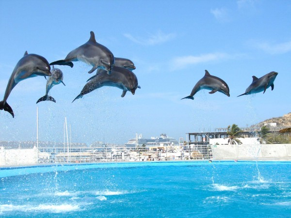 30+ Outstanding Pictures of Dolphins