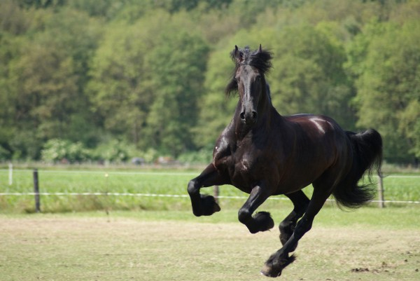 30+ Attractive Pictures Of Horses