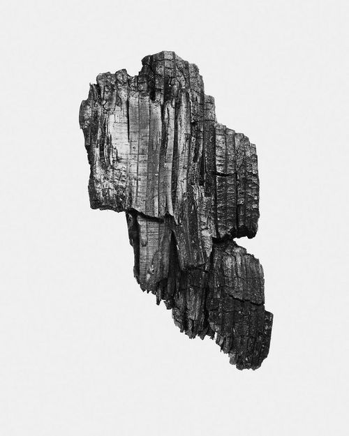 Piece of rotted wood http://workplaydress.tumblr.com/post/98772390586 in Silence. Sound. Echo