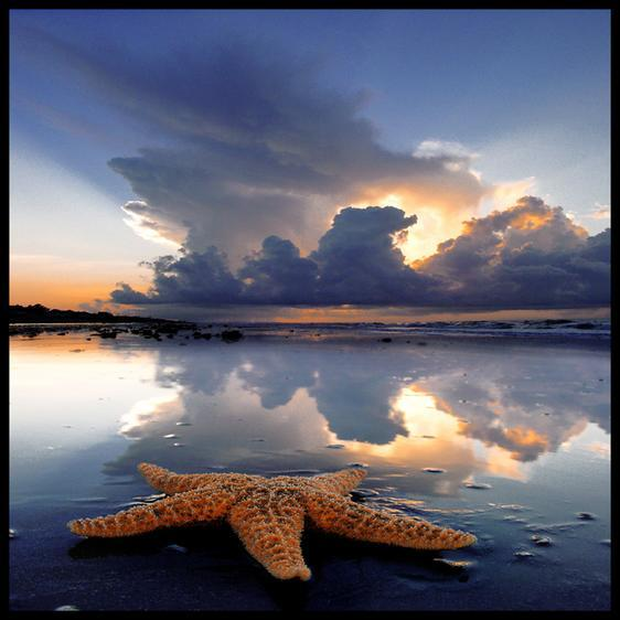 starfish: Photo by Photographer Foureyes . - photo.net