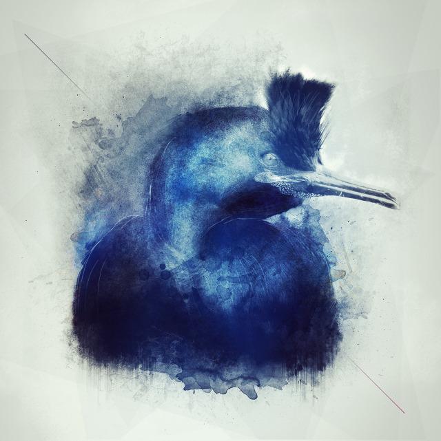 Bird - Andaur Studios / Sebastian Andaur