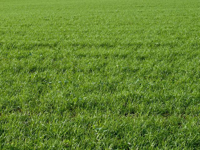 Grass Texture | Flickr - Photo Sharing!