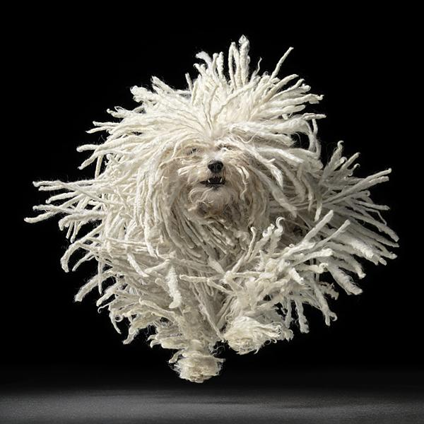 Absolutely Amazing Dog Photos from Tim Flach