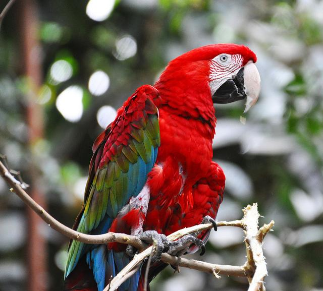 Macaw - Detroit Zoo | Flickr - Photo Sharing!