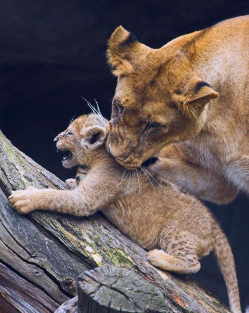 King of Day Dreamers - llbwwb: NO,Mommy! by Guerito