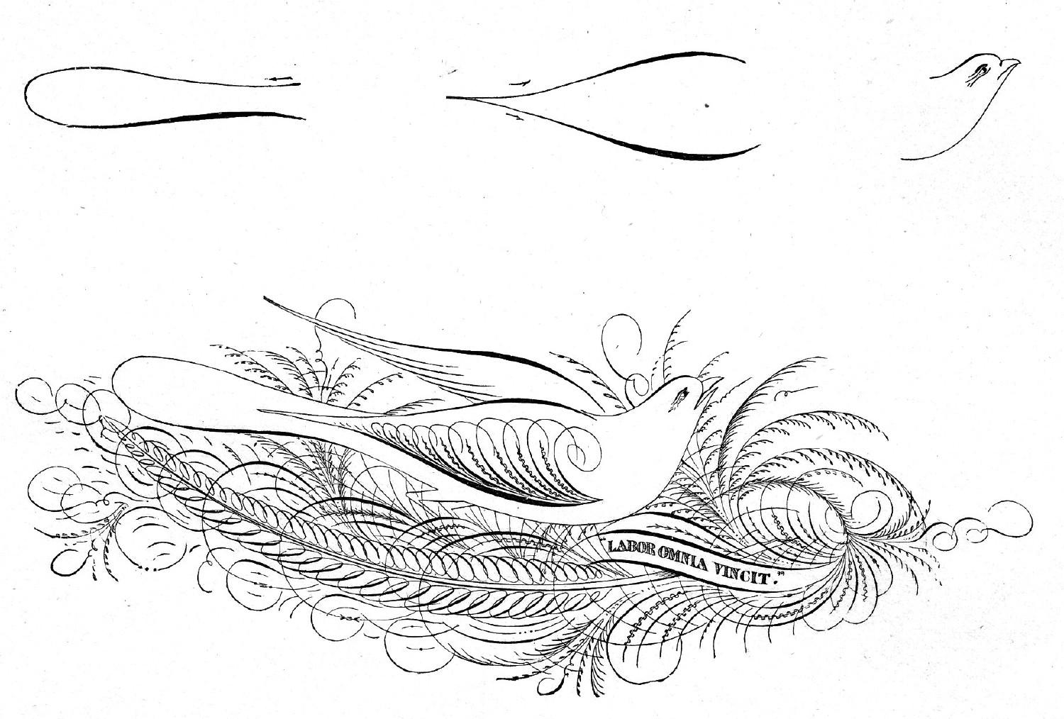 Ames' Guide to Self-Instruction in<br>Practical and Artistic Penmanship<br>Daniel T. Ames, 1884