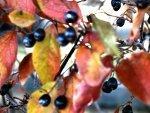 Berries by ~Mind-Illusi0nZ-Stock