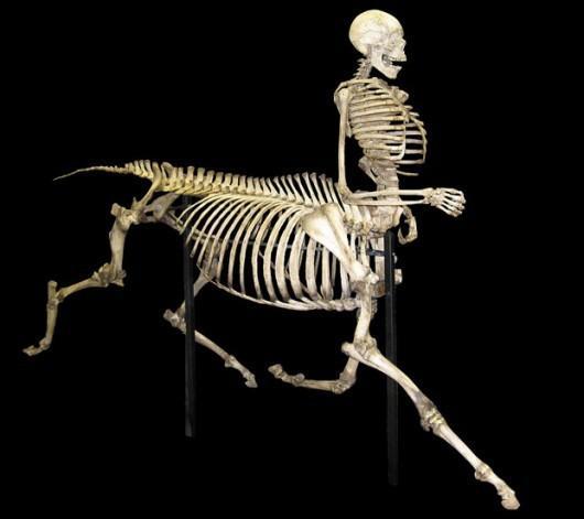 Oooo, portentous! / Piccsy :: Centaur Skeleton