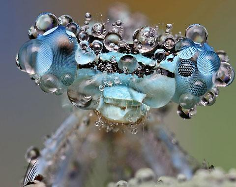 Photos of insects covered in drops of water — Lost At E Minor: For creative people