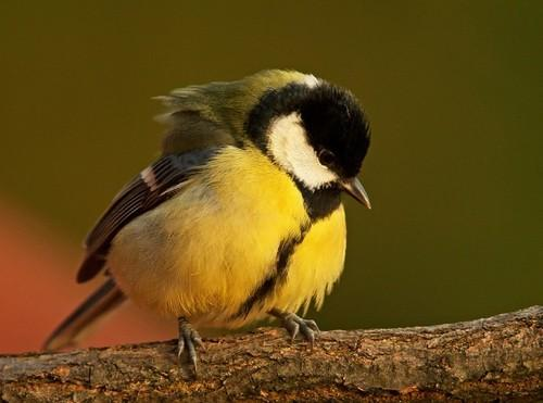 Animal photography by Sandor Bernath {Part 2} birds