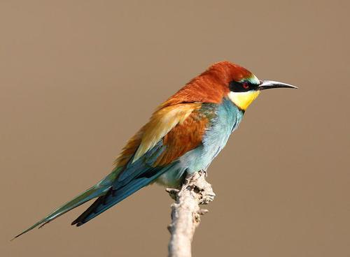 Animal photography by Sandor Bernath {Part 2} birds