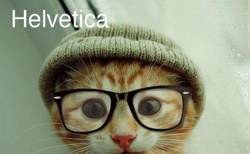Funny: Cats & fonts