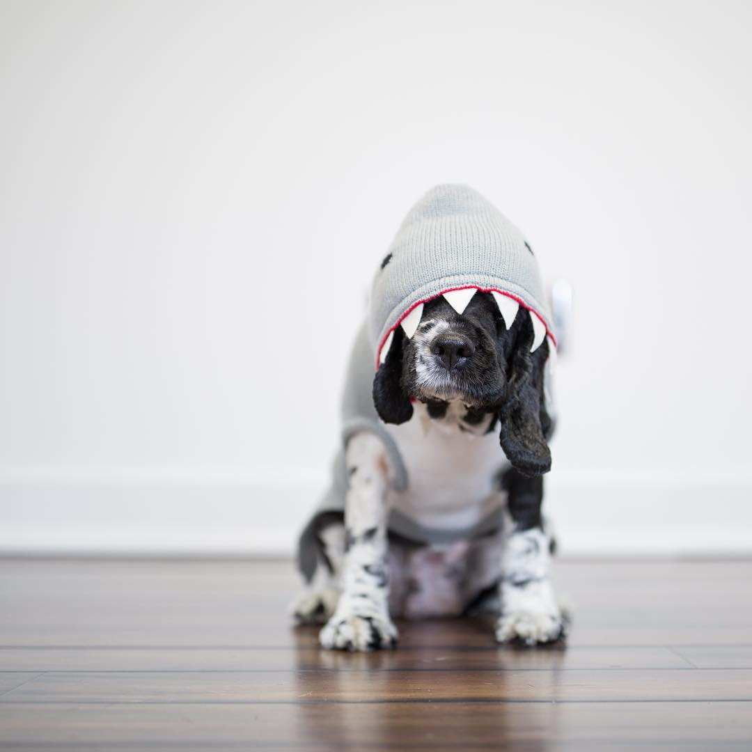 Stunning Dog Portraits by Greg Murray