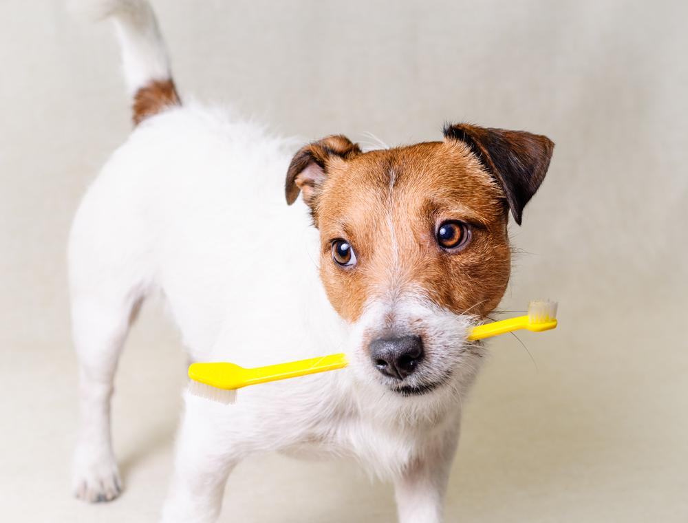 Vet Supply Source Blog - Brush Up On Your Pets' Dental Health