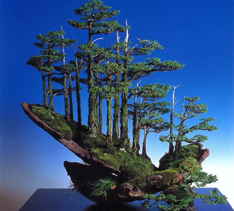 MargemFormal: História do Bonsai