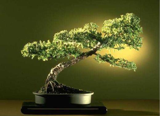 MargemFormal: História do Bonsai