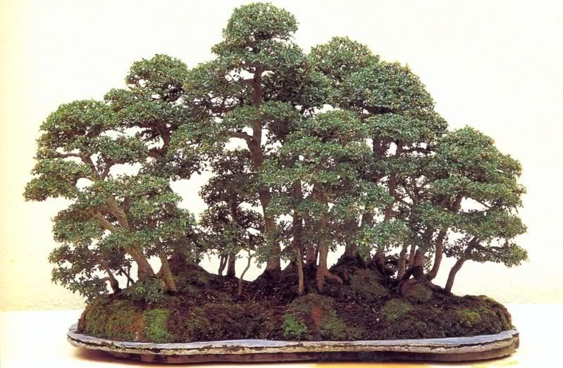Bonsai: A arte de criar árvores em minatura   Mundo Gump