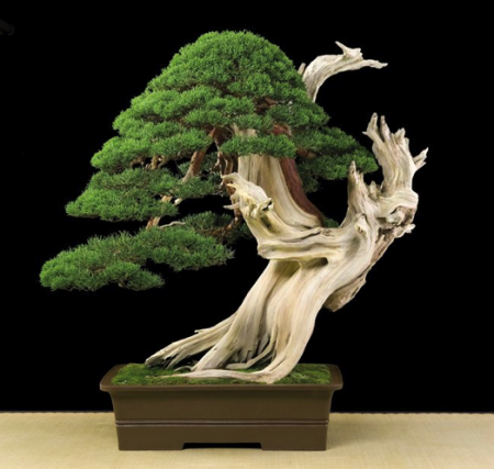 Bonsai: A arte de criar árvores em minatura | Mundo Gump