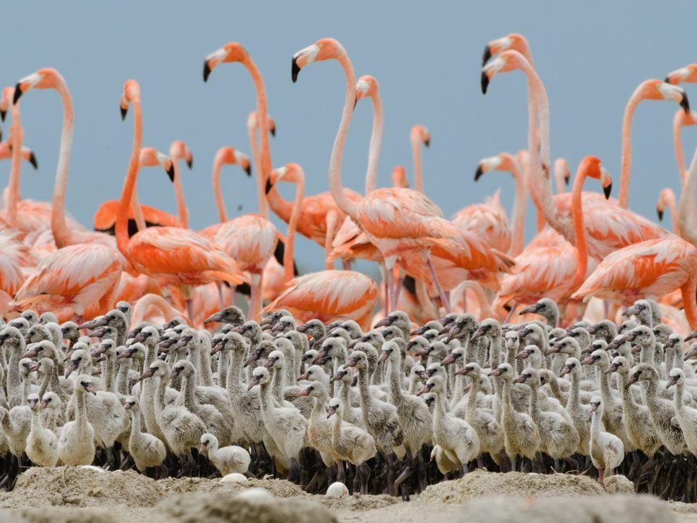 Flamingo Picture – Bird Photo – National Geographic Photo of the Day