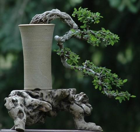 Resultados da Pesquisa de imagens do Google para http://www.cuidar.com.br/files/bonsai-kengai-foto.jpg