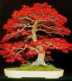 Resultados da Pesquisa de imagens do Google para http://justhow2.com/wp-content/uploads/2011/03/plants_main_bonsai.jpg