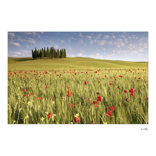 Poppy's Field: Photo by Photographer Michele Berti - photo.net