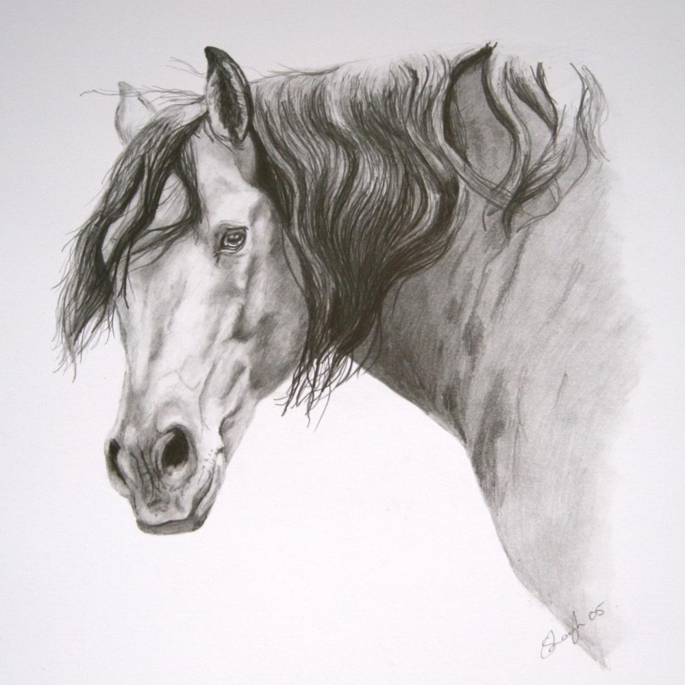 Resultados da Pesquisa de imagens do Google para http://www.sarahspetportraits.co.uk/new/pet-portrait-portfolio/other-work/lusitano-stallion-pet-portrait-ENLARGE.jpg