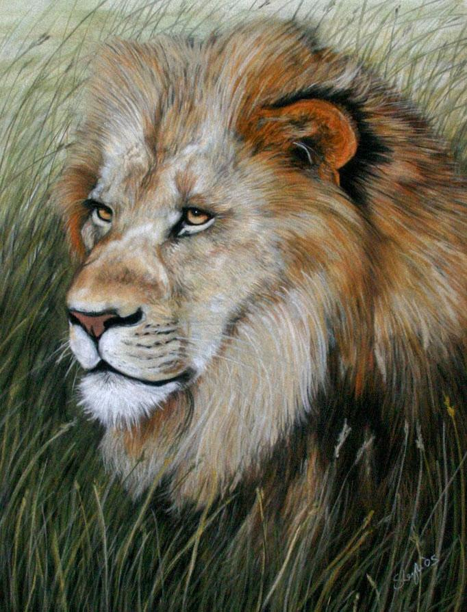 lion-pet-portrait-ENLARGE.jpg (682×894)