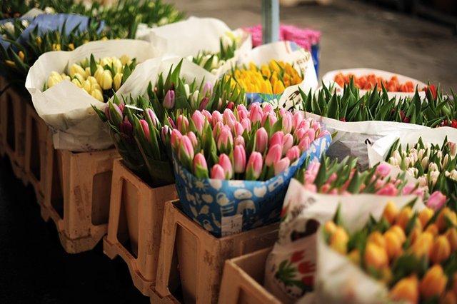 Fancy - French Tulips