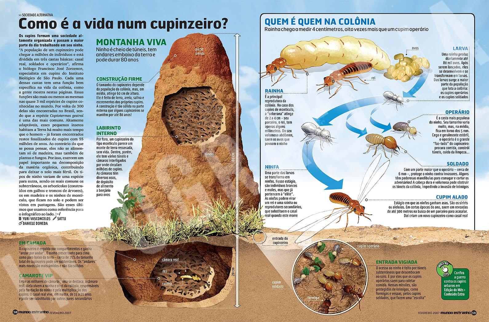 INFO+CUPINZEIRO.jpg (1590×1048)