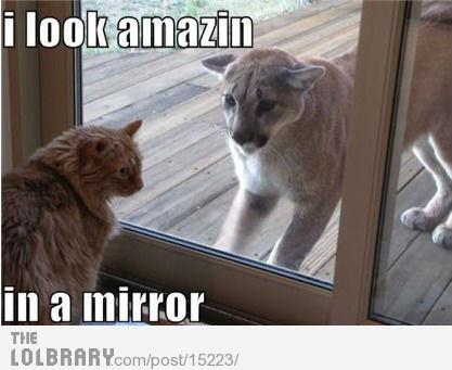 Cat loves the way he looks in the mirror | The Lolbrary - New Funny Random Pictures Added Daily