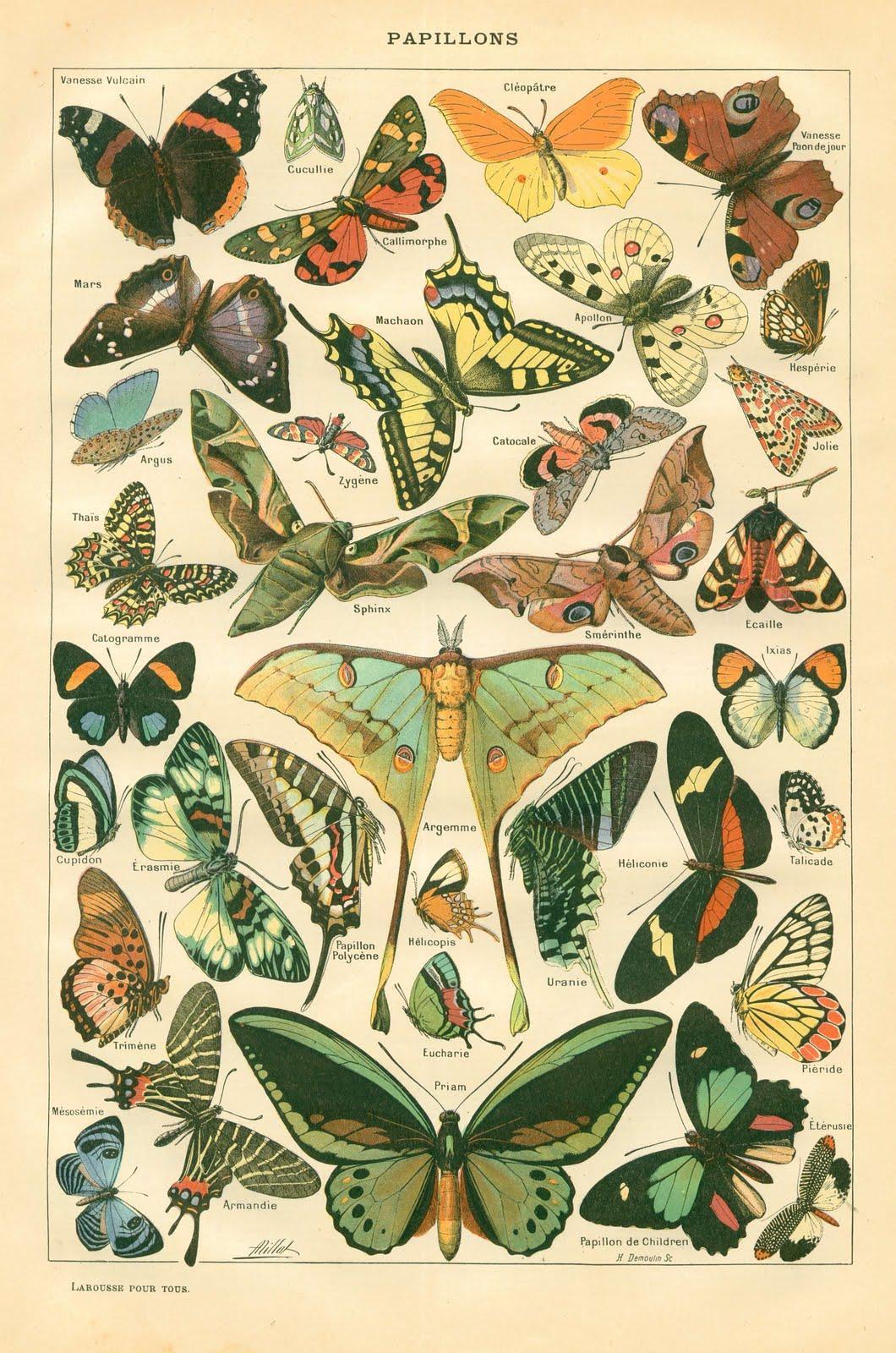 butterflies2.jpg (1060×1600)