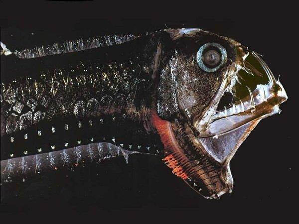 10 Most Diabolical Fish On Earth