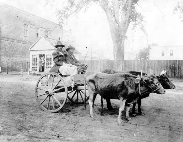 Unidentified couple in an ox cart: Quincy, Florida | Flickr - Photo Sharing!