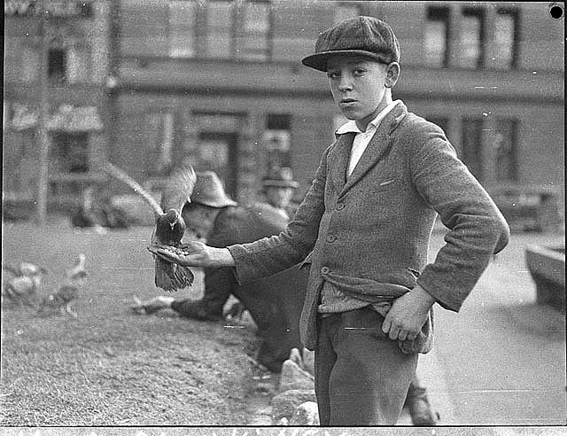 Boy with pigeons at [Circular] Quay, Sydney, 22/6/1935 / by Sam Hood | Flickr - Photo Sharing!