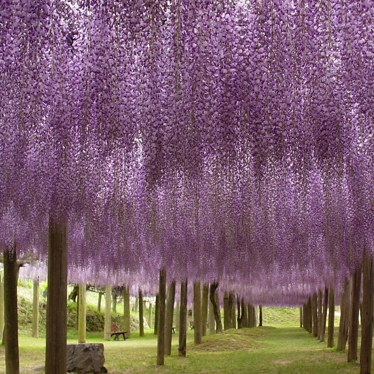 Kawachi+Fuji+Garden+4.jpg (1190×1190)