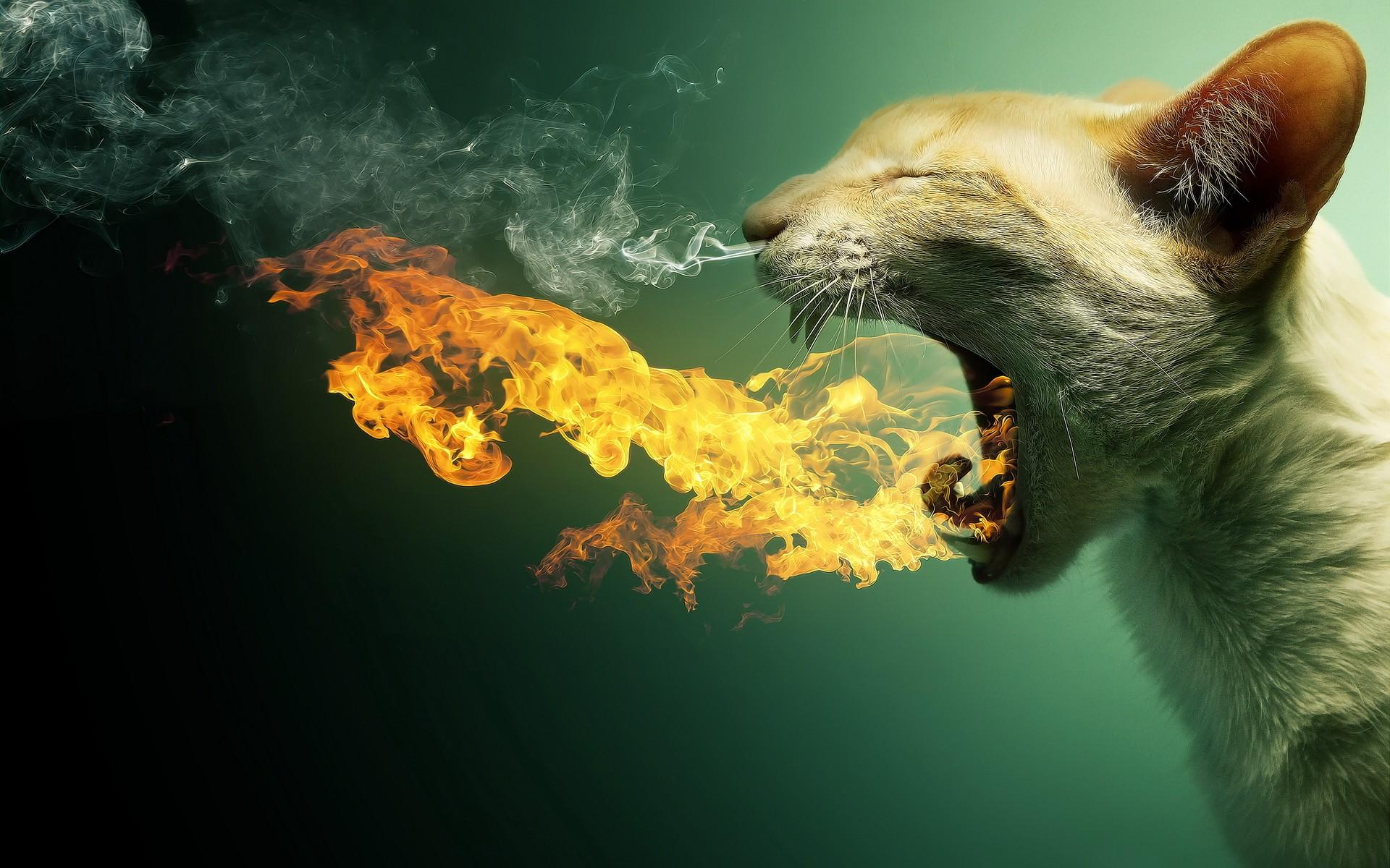 cats animals funny DeviantART flaming photomanipulations - Wallpaper (#1823238) / Wallbase.cc