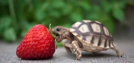 baby-turtle.jpg (560×262)