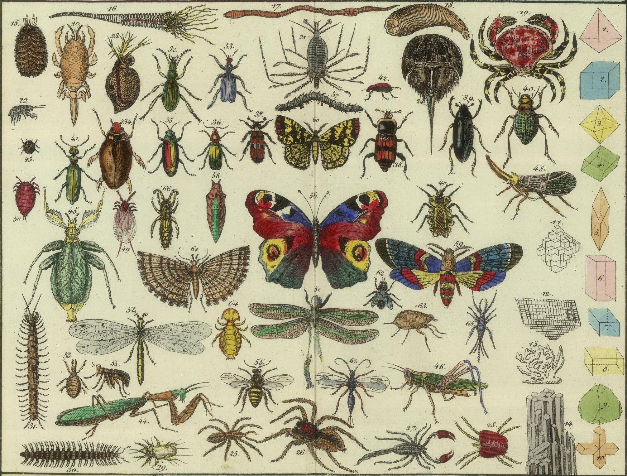 All sizes | Tableau d'histoire naturelle Annelides, Crustaces, Arachnides, etc, 1834 (detail) | Flickr - Photo Sharing!