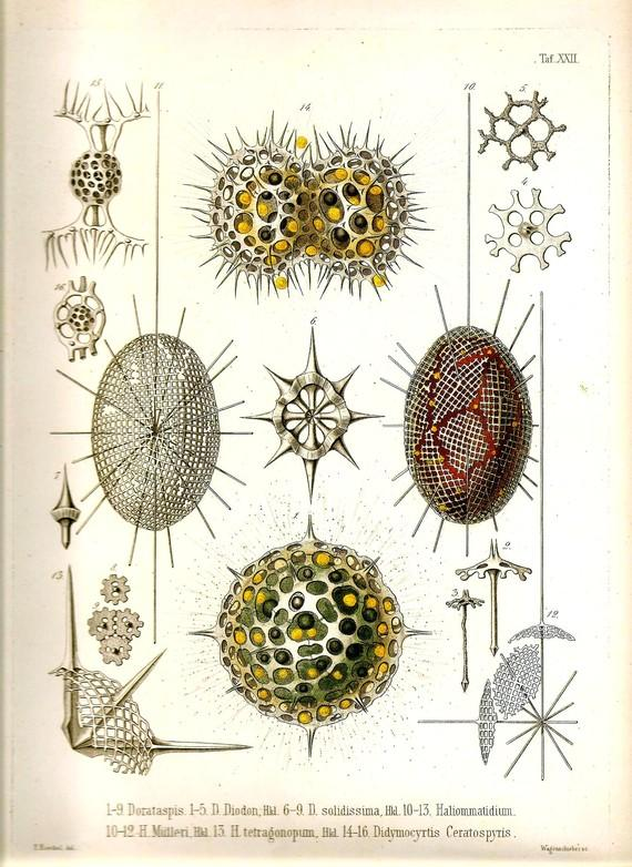 Print OCEAN Ernst Haeckel 2010 Lithograph by NaturalistCollection