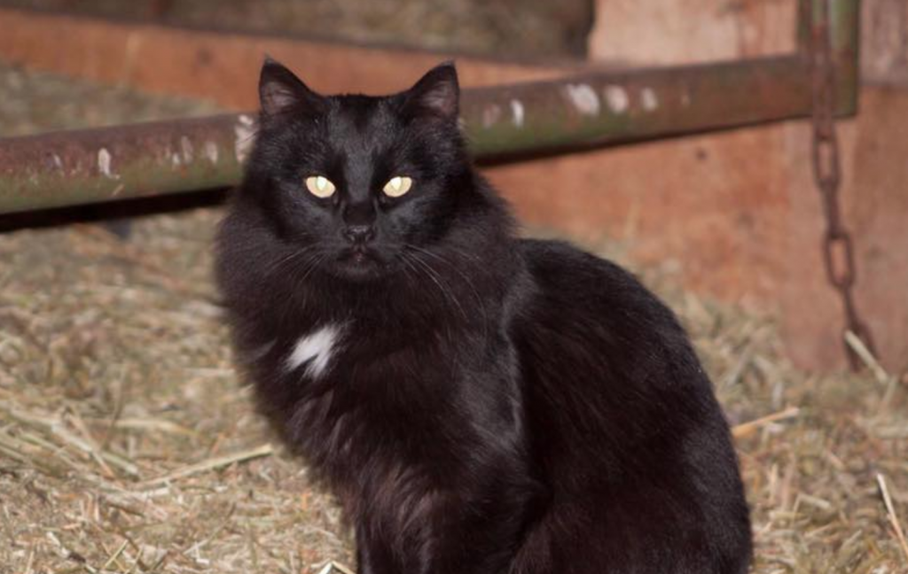 Ralphie is Graduate of Gabby's Barn Cat Program | Life With Cats