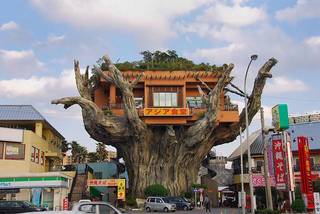 Big Tree House | Flickr - Photo Sharing!