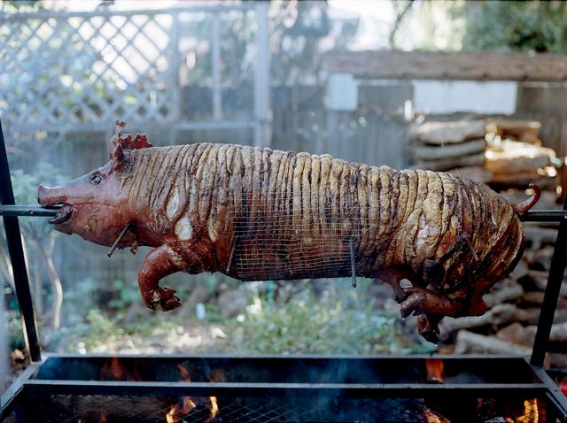 Pig Roast | Flickr - Photo Sharing!