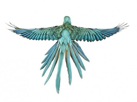 Andrew Zuckerman. Bird.   A Photography Blog — Designspiration