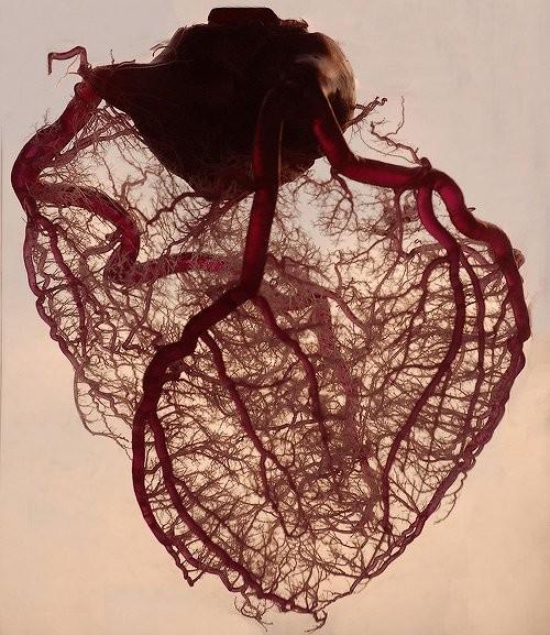 Piccsy :: heart
