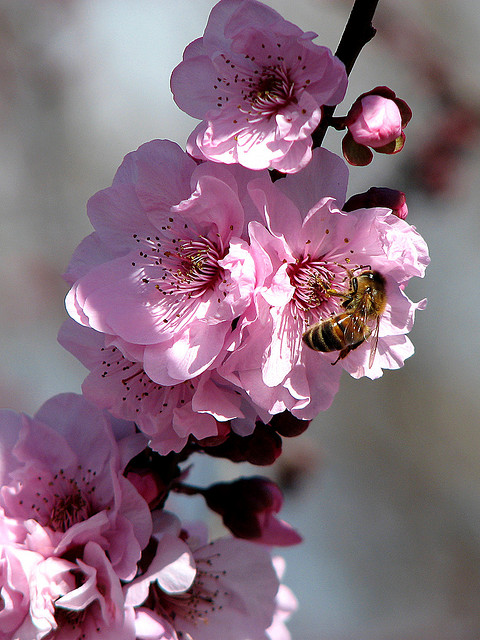 Bees and Flowers | Flickr - Photo Sharing!