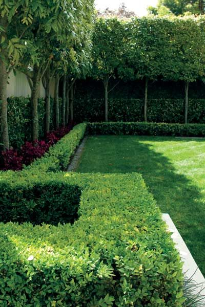 Garden pleached titoki layering lawn hedge tall thin for Garden design ideas with hedges