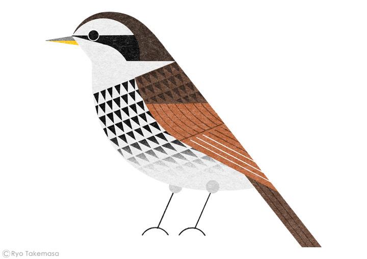 Bird Handbook on
