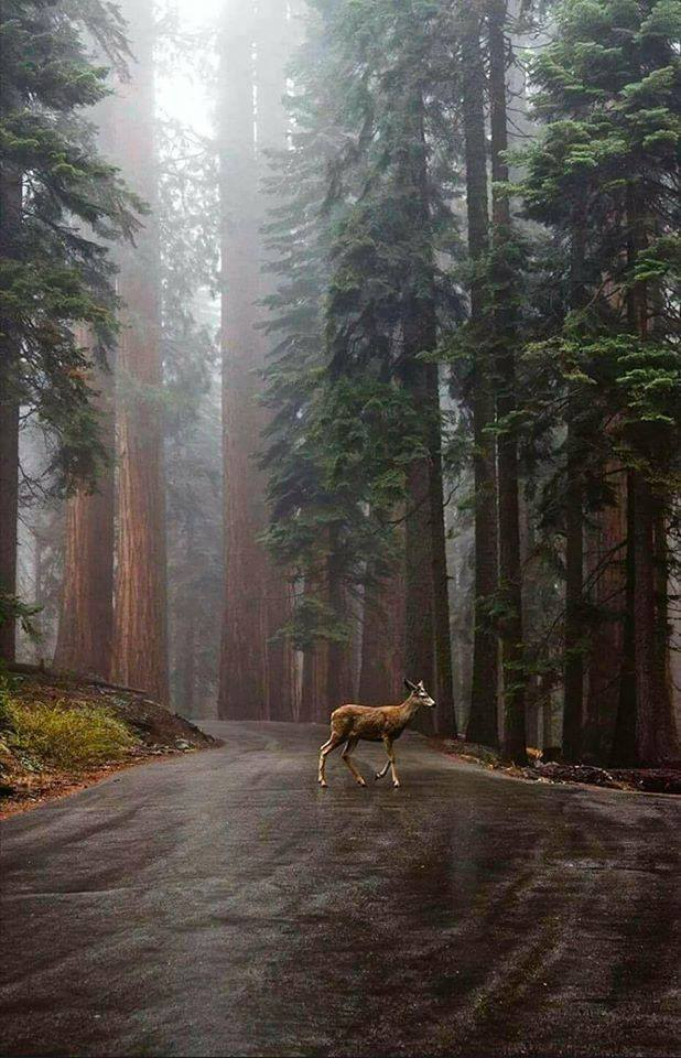 Beauty of a forest in California on Inspirationde